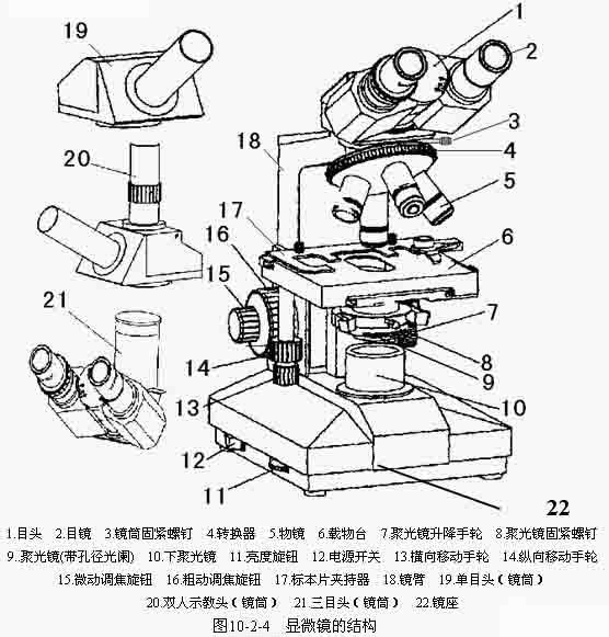 生物显微镜的基本结构